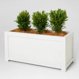 planter-box-white-with-plant-for-hire